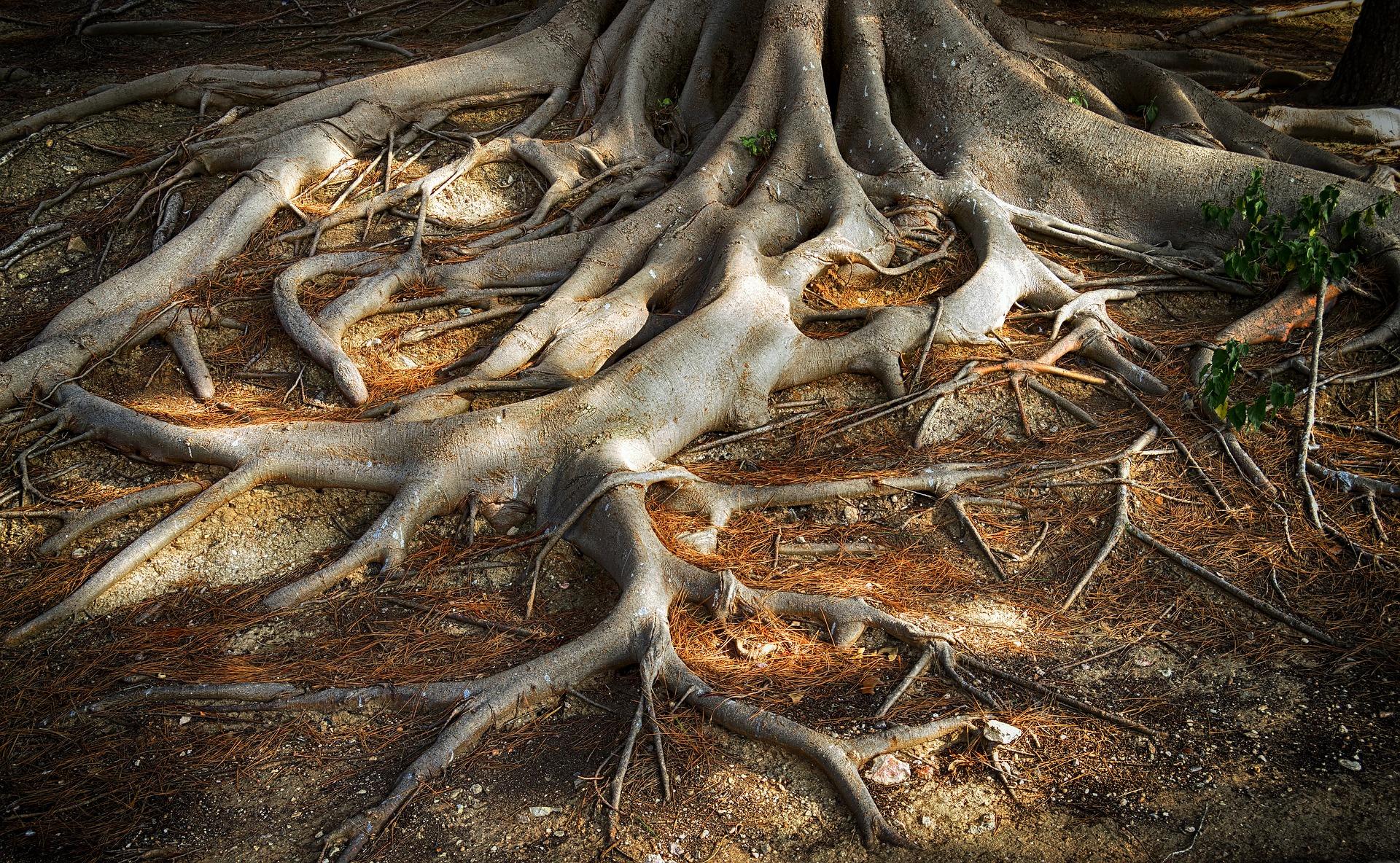Não subestime as suas raízes!